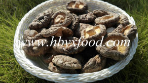 Stemless Smooth Cap Dried Shiitake Mushroom pictures & photos
