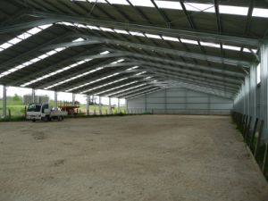 Horse Riding Arena Steel Building (SS-613) pictures & photos