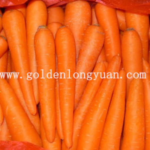 2014 New Crop Carrot with Good Quality pictures & photos