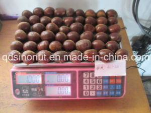 2015 Crop Fresh Chestnut pictures & photos