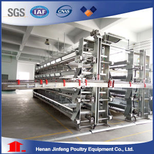 Automatic Chicken Cage From Jinfeng H Type and a Type Chicken Cages pictures & photos