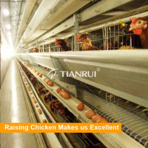 Tianrui Best Design Durable Automatic H Frame Battery Layer Chicken Cage pictures & photos