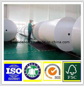 Grade a 200g 230g 250g White Top Testliner Paper Board in Roll pictures & photos