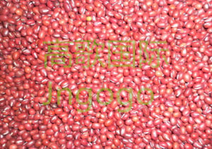 Export Chinese New Crop Good Quality Red Bean pictures & photos