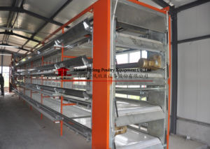 H Type Automatic Broiler Chicken Birds Poultry Cage pictures & photos