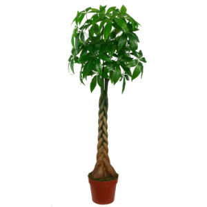 Natural Looking Artificial Plants of Fortune Tree in 170cm Height pictures & photos