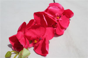 Factory Direct Plastic Artificial Orchid Flowers for Wedding Decoration pictures & photos