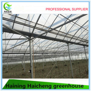 Multi Span Film Vegetable Greenhouse in Commen Use pictures & photos