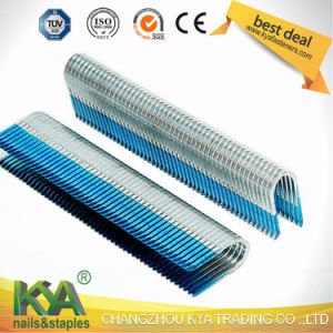 Galvanized Pneumatic Staples (BCS31P) as Joiners pictures & photos