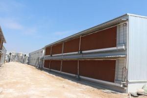 Prefabricated Steel Frame Environmental Control Poultry Shed Construction pictures & photos