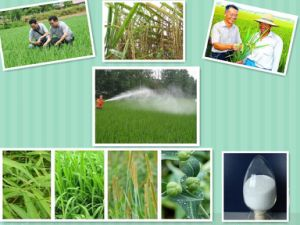 Agrochemicals Agricultural Chemicals Herbicide Weedicide Weedicide Glyphosate 95% Tc 48% SL pictures & photos