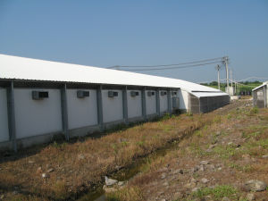 Prefab Chicken House with Automatic Poultry Equipments pictures & photos