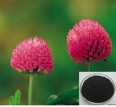 Manufacture High Quality Red Clover Extract/Trifolium Pratense Extract/Trifolirhizin pictures & photos
