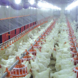 2016 Hot Sale Chicken Farm Equipments with Steel Structure Poultry Shed pictures & photos