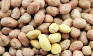 Export Good Quality Fresh Chinese Peanuts in Shell pictures & photos
