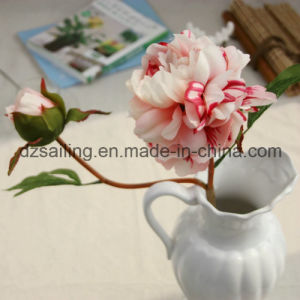 Hand Feeling Coating Peony Artificial Flower for Home/Wedding Decoration (SF16043) pictures & photos
