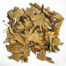 100% Natural Cyrtomium Fortunei Extract pictures & photos