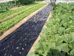 PE Agriculture Biodegradable Mulch Film