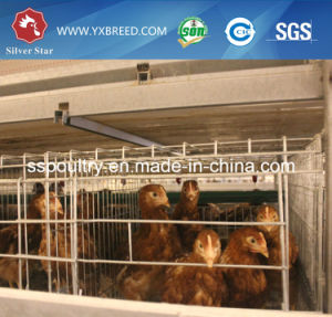 Hot Galvanized International Standard Poultry Equipment Chicken Layer Cage pictures & photos