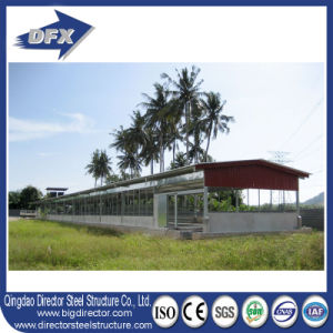 Automatic Poultry Farm for Broilers and Chickens pictures & photos
