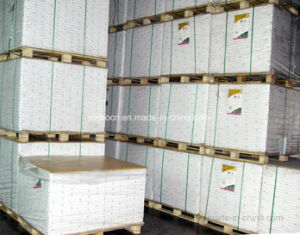 White Coated Duplex White Back Cardboard/Triplex pictures & photos