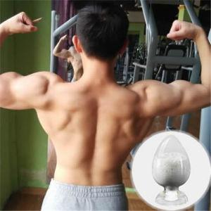 Legal Safe Sarm Series Gw501516 (GSK-516, Endurobol) for Bodybuilding pictures & photos