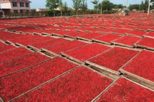 Organic Goji Juice Powder, Wolfberry Juice, Lycium Chinense Mill pictures & photos