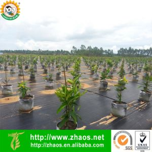 High Quality PP Landscape Fabric Tree Weed Mat Ground Covering pictures & photos