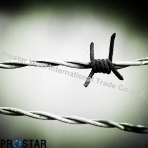 Sophisticated Technology Barbed Wire for Security Protected pictures & photos
