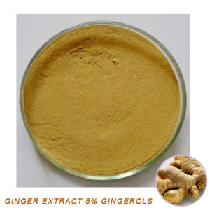 Natural Ginger Extract 5% Gingerols pictures & photos