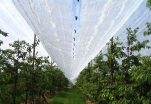 100% Virgin HDPE Anti Insect Mesh Screen