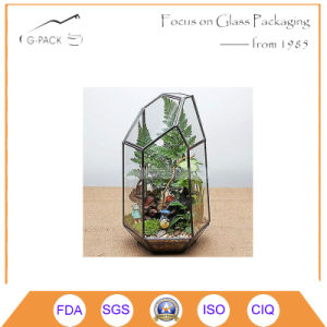 Geometric Terrarium Box Succulent Plant Planter Greenhouse Pick pictures & photos