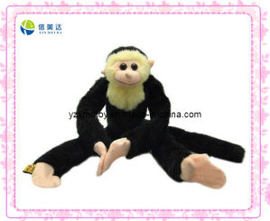 Black Long Legs and Arms Hanging Monkey Plush Toy pictures & photos