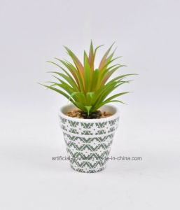 Kinds of Artificial Succulent Plants with Classical Potted for Your Home/Office Decoration pictures & photos