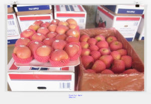Sweet Fresh FUJI Apple Supplier pictures & photos