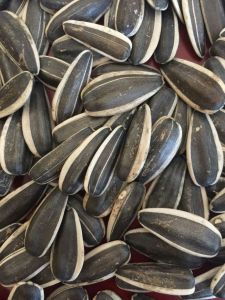 Export Good Quality Fresh Chinese Sunflower Seeds pictures & photos