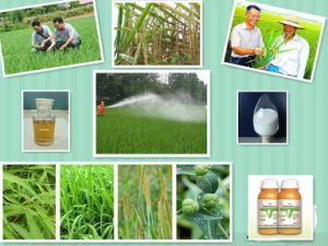 Agrochemicals Technical Weedcide Herbicide Gramoxone pictures & photos