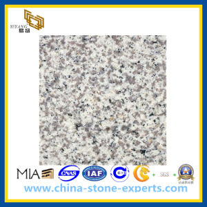 G655 Tong′an White Granite Slab for Countertop & Vanitytop (YQG-GS1014) pictures & photos
