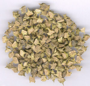 Natural Franosterols Saponins Tribulus Terrestris Extract pictures & photos