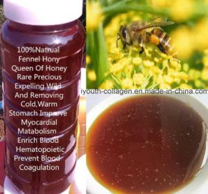 Top Queen of Honey, Pure Fennel Honey Most Fragrance, Rare Precious No Antibiotics, No Pesticides, No Pathogenic Bacteria, Nourish Internal Organs, Prolong Life pictures & photos