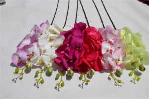 Wholesale China Factory Artificial Flower Phalaenopsis Fake Orchids pictures & photos