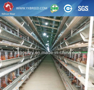 Egg Production Project Poultry Farming Equipment H Type Layer Chicken Cage for Sale pictures & photos