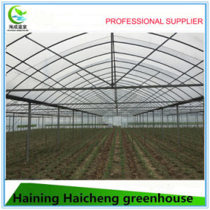Commercial Hydroponic Film Green House for Pepper pictures & photos