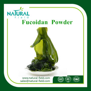 with 12 Years Experience Natural Supplement 10%-90% Seaweed Extract Powder Fucoidan pictures & photos