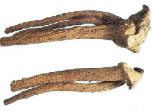 Elecampane Root pictures & photos