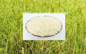 Cambodian Premium Jasmine Rice 5% pictures & photos