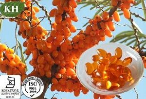 100% Natural Sea Buckthorn Seed Oil Scfe-CO2. pictures & photos