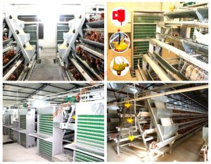 Automatic Chicken Cage for Layers or Broiler pictures & photos
