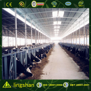 Steel Structure Farm (L-S-054) pictures & photos