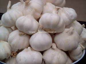 Globel G. A. P Certified Fresh Garlic pictures & photos